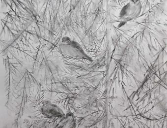 oiseaux1-st-lambert