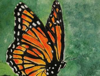 "Papillon 12"" x 9"""
